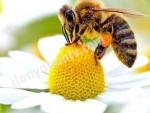 Adıyaman da sahibinden seçmece satılık arı