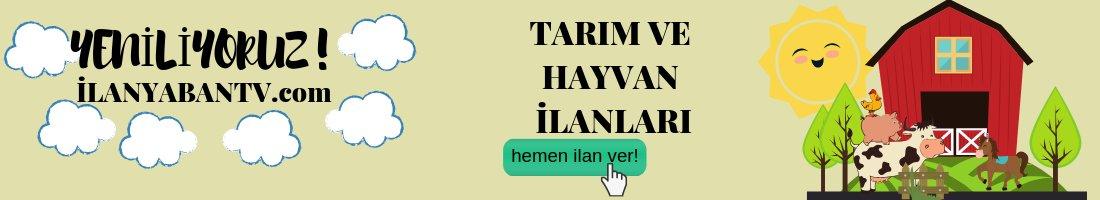 ilanya_1.jpg