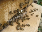 Adanada arı satışımız başlamıştır merhaba temiz akili ari